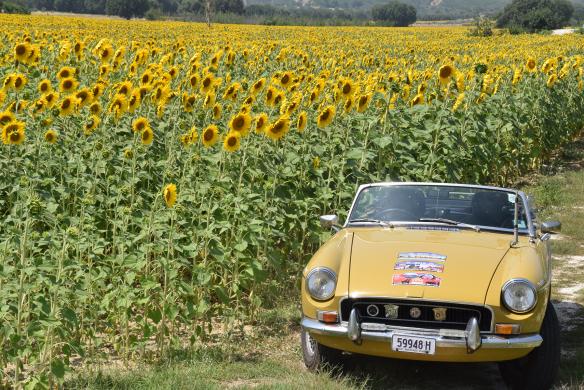 الصورة 2 سيارة 'إم جي بي رودستر' طراز 1970 ذهبية اللون